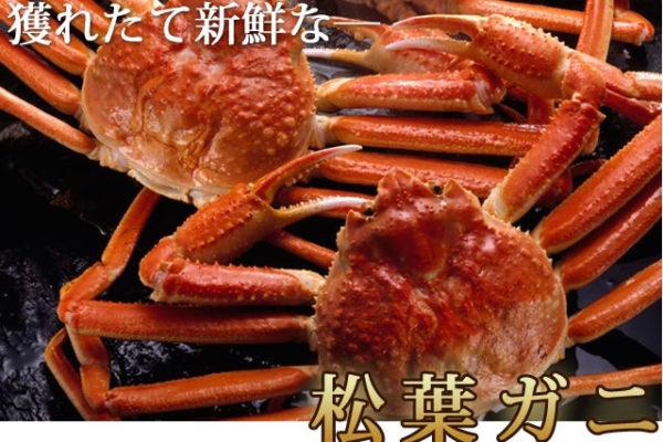 【活・松葉ガニ】産地直送お取り寄せ!おすすめズワイガニ通販